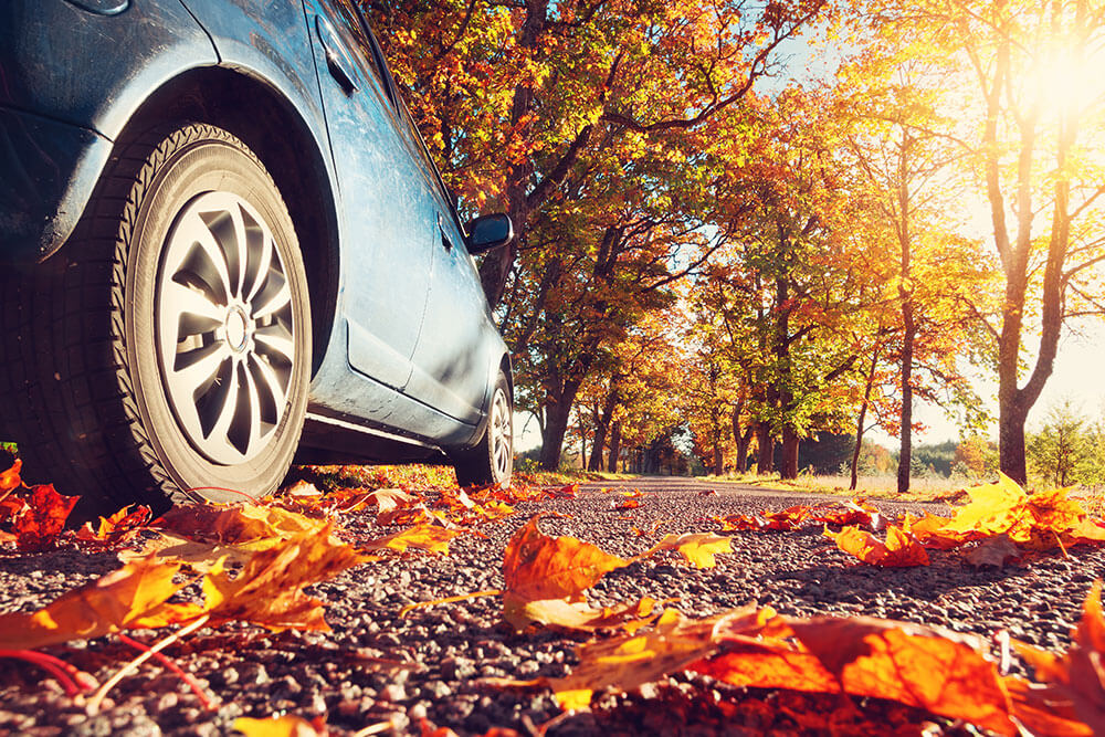 Fall Care Tips for your European Car